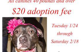Big Dog = Big Love Adoption Special