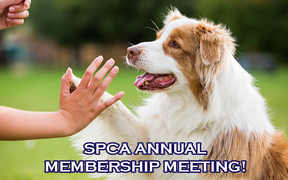 SPCA Annual Membership Meeting