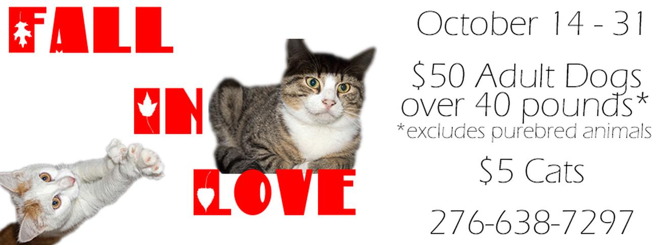 Fall in Love Adoption Special