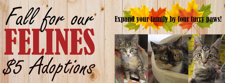 Fall for Felines