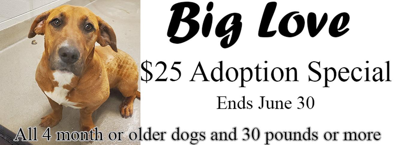 Big Love Adoption Special