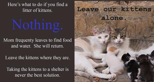 Leave our kittens alone.